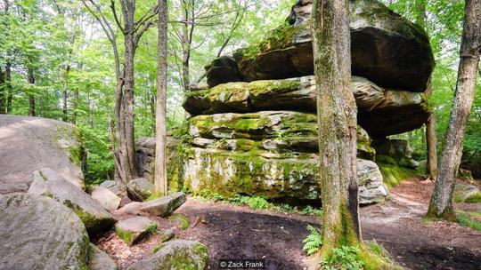 Khu rừng bí mật đẹp mê hồn trong lòng nước Mỹ - 7