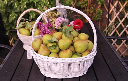 """""""Lác mắt"""" vườn lê, táo sai lúc lỉu của bà mẹ Việt Kiều - 8"""