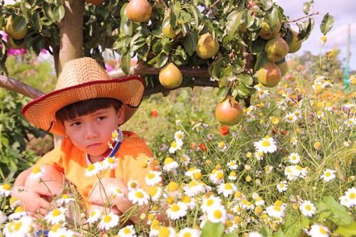"""""""Lác mắt"""" vườn lê, táo sai lúc lỉu của bà mẹ Việt Kiều - 5"""