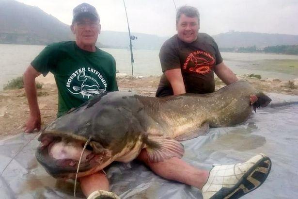 Kinh ngạc cá trê khổng lồ 90kg, dài hơn 2m ở Tây Ban Nha - 1