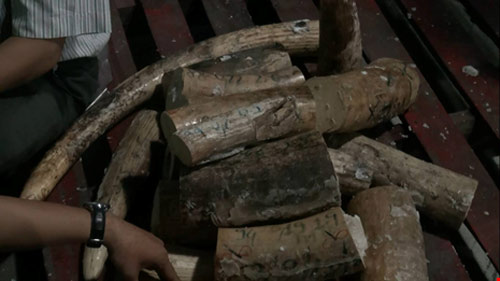 Lô ngà voi tiền tỉ từ châu Phi bị phát hiện - 1