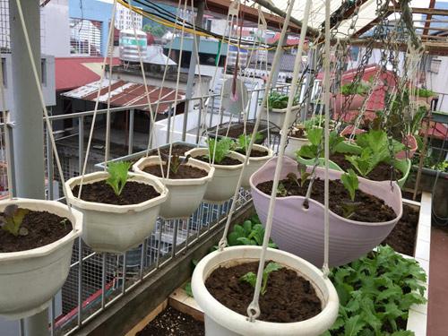 Vườn rau 50m2 ăn không xuể của bà mẹ Hà thành - 2