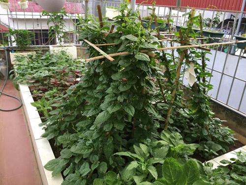 Vườn rau 50m2 ăn không xuể của bà mẹ Hà thành - 11