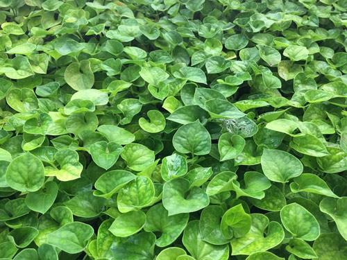 Vườn rau 50m2 ăn không xuể của bà mẹ Hà thành - 13