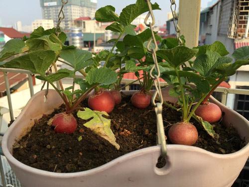Vườn rau 50m2 ăn không xuể của bà mẹ Hà thành - 14