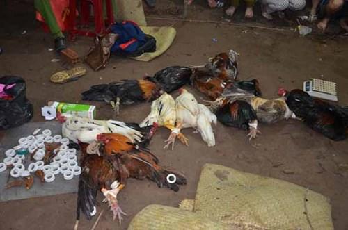 Đột kích trường gà trong đêm, bắt hàng chục con bạc - 2