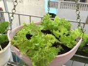 Bạn trẻ - Cuộc sống - Vườn rau 50m2 ăn không xuể của bà mẹ Hà thành