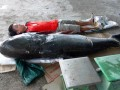 Bắt được cá tra dầu 'khủng', nặng 130 kg trên sông Sêrêpốk