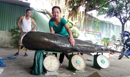 Bắt được cá tra dầu 'khủng', nặng 130 kg trên sông Sêrêpốk - 1