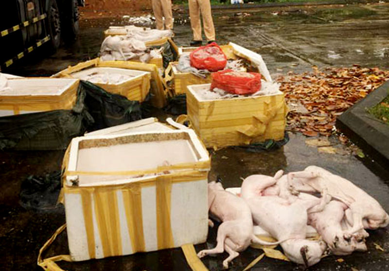 Phát hiện ô tô chở gần 700kg thịt chó, mèo không rõ xuất xứ