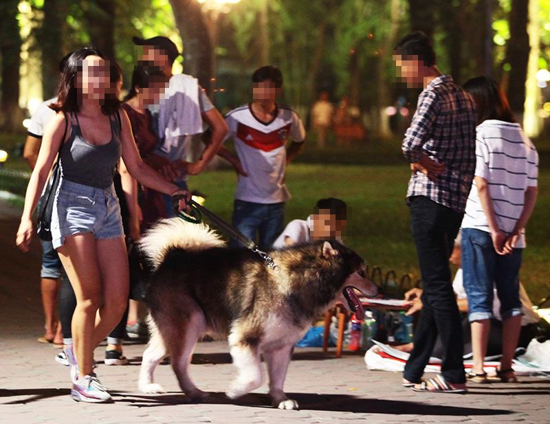 Cấm chó ở phố đi bộ: Chủ nhét chó vào túi để qua chốt - 2