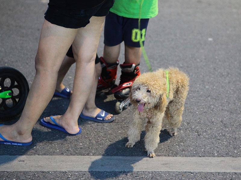 Cấm chó ở phố đi bộ: Chủ nhét chó vào túi để qua chốt - 3