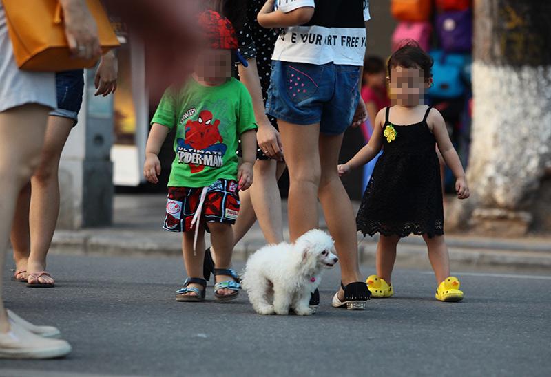 Cấm chó ở phố đi bộ: Chủ nhét chó vào túi để qua chốt - 6
