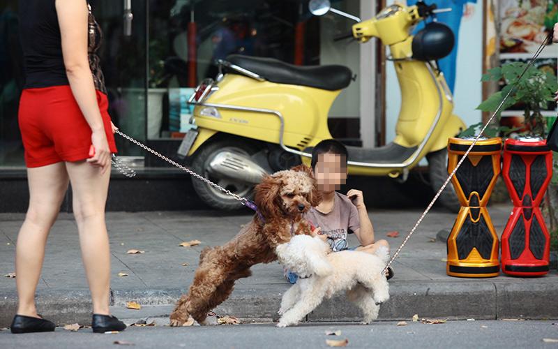 Cấm chó ở phố đi bộ: Chủ nhét chó vào túi để qua chốt - 9