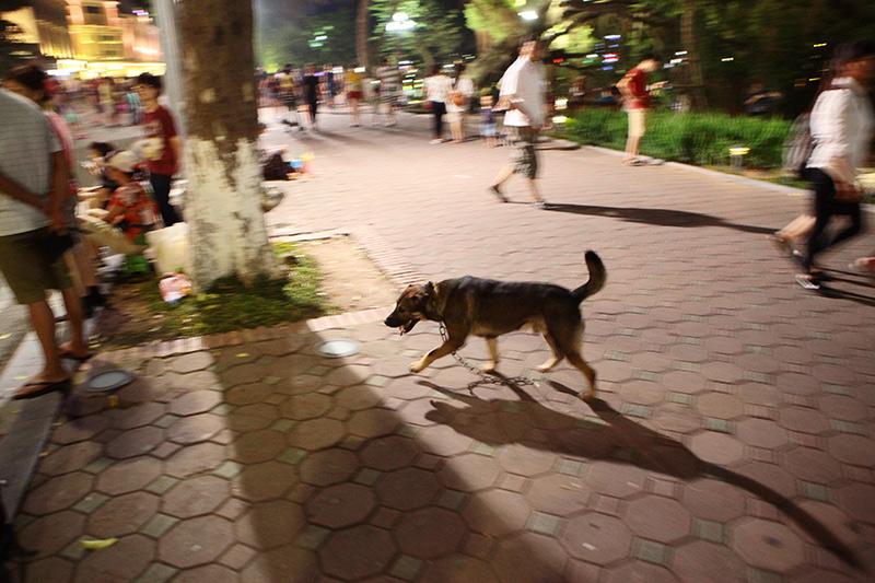 Cấm chó ở phố đi bộ: Chủ nhét chó vào túi để qua chốt - 13