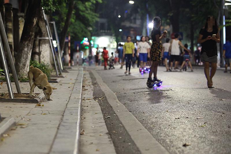 Cấm chó ở phố đi bộ: Chủ nhét chó vào túi để qua chốt - 10