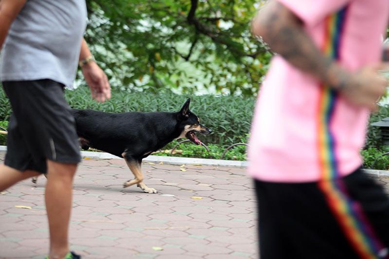 Cấm chó ở phố đi bộ: Chủ nhét chó vào túi để qua chốt - 12