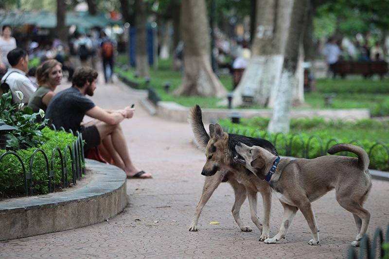 Cấm chó ở phố đi bộ: Chủ nhét chó vào túi để qua chốt - 11