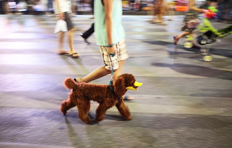Cấm chó ở phố đi bộ: Chủ nhét chó vào túi để qua chốt - 14