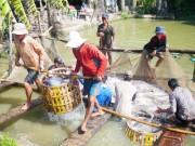 Thị trường - Tiêu dùng - Nhiều chất cấm không còn phát hiện trong thủy sản