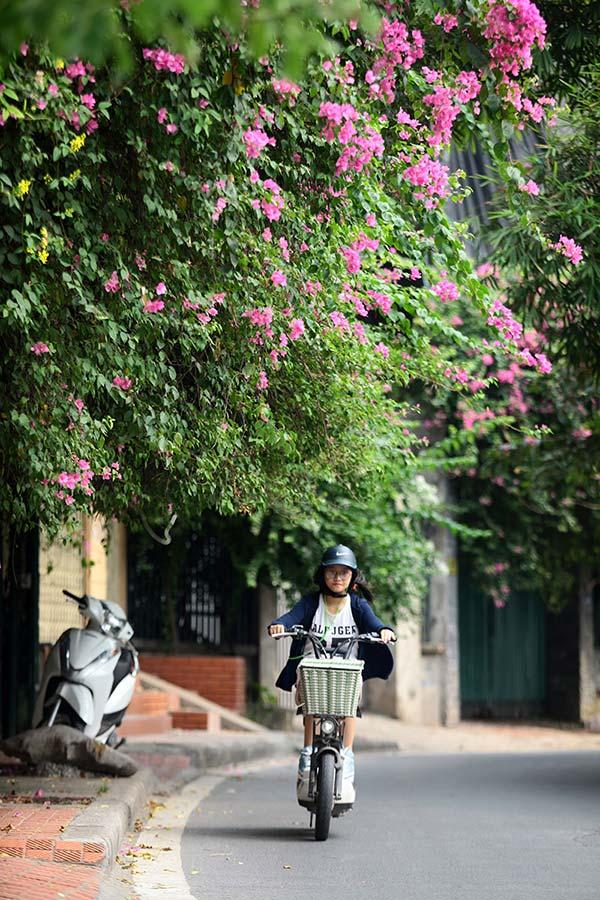 Những giàn hoa giấy khiến Hà Nội trở nên thơ hơn - 9