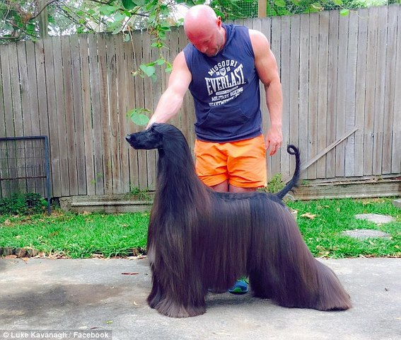 Chú chó nổi tiếng vì lông dài lượt thượt như suối tóc - 2