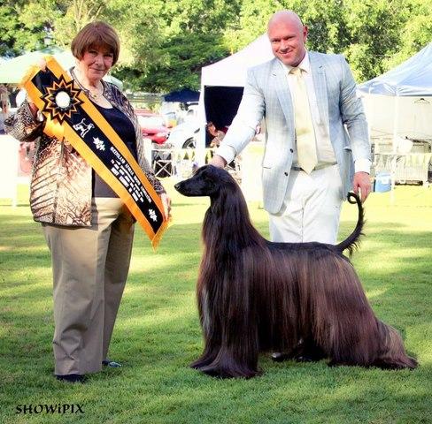 Chú chó nổi tiếng vì lông dài lượt thượt như suối tóc - 4