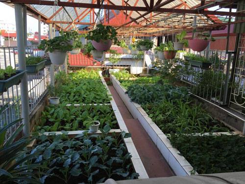 Vườn rau 50m2 ăn không xuể của bà mẹ Hà thành - 1