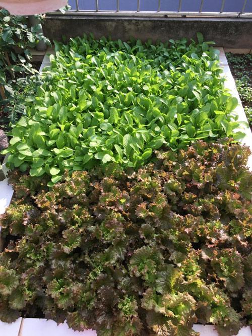 Vườn rau 50m2 ăn không xuể của bà mẹ Hà thành - 3