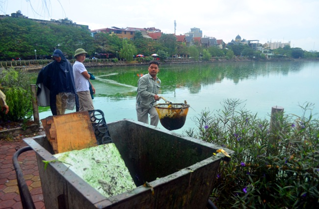 HN: Nước hồ Văn Quán đổi màu xanh biếc, hôi thối nồng nặc - 5