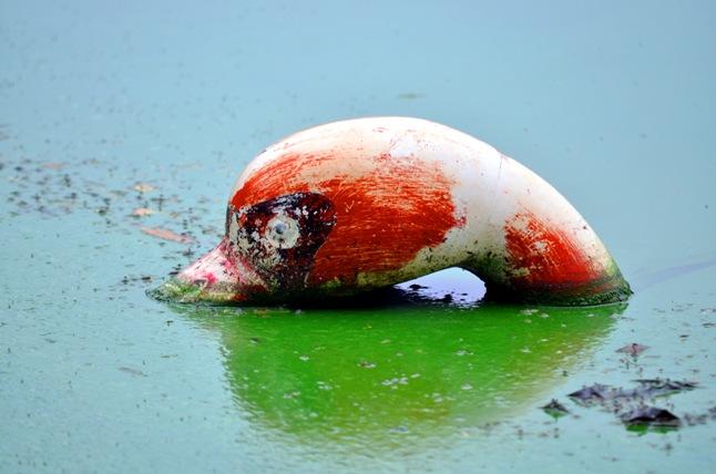 HN: Nước hồ Văn Quán đổi màu xanh biếc, hôi thối nồng nặc - 3