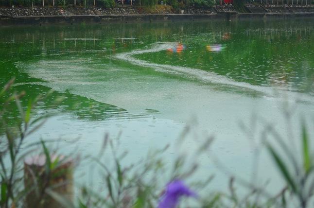 HN: Nước hồ Văn Quán đổi màu xanh biếc, hôi thối nồng nặc - 9