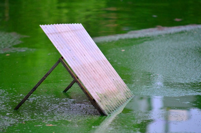 HN: Nước hồ Văn Quán đổi màu xanh biếc, hôi thối nồng nặc - 8