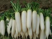Sức khỏe đời sống - 5 thực phẩm kỵ ăn với củ cải trắng vì dễ sinh bệnh