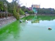 Tin tức trong ngày - HN: Nước hồ Văn Quán đổi màu xanh biếc, hôi thối nồng nặc