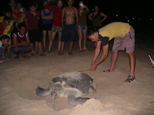Mắc đẻ nhưng nhiều người xem, rùa nín đẻ trở lại biển - 2