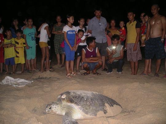 Mắc đẻ nhưng nhiều người xem, rùa nín đẻ trở lại biển - 3