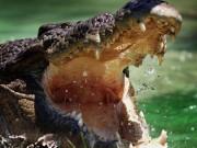 Cá sấu xóa sổ gần 1.000 lính Nhật trong Thế chiến 2