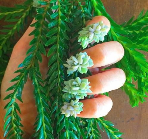 Rộ mốt mới trồng cây trên móng tay - 3