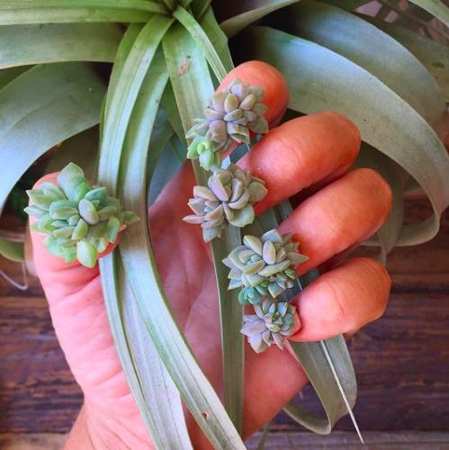 Rộ mốt mới trồng cây trên móng tay - 4