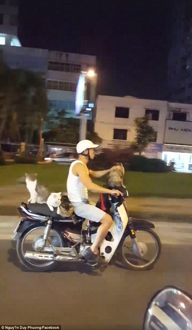 Báo Anh kinh ngạc thanh niên VN đi xe máy chở 4 chú mèo - 1