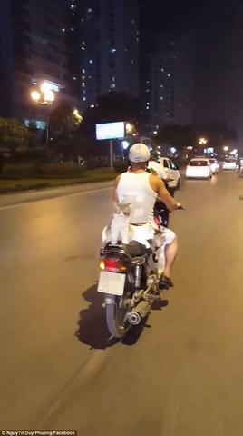 Báo Anh kinh ngạc thanh niên VN đi xe máy chở 4 chú mèo - 2
