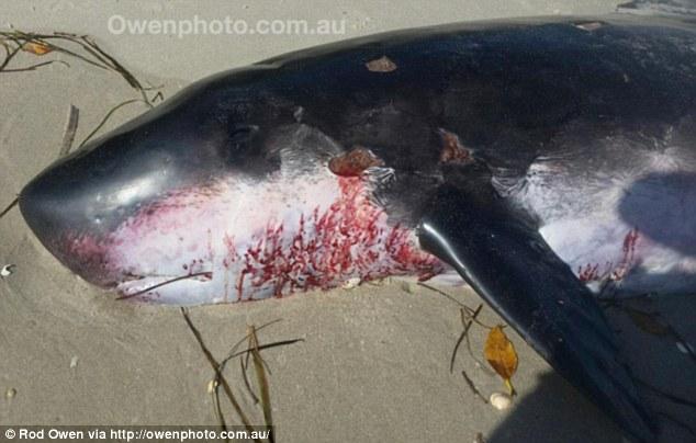 Phát hiện sinh vật biển bí ẩn trôi dạt vào Australia - 1