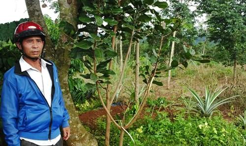 Vụ nổ súng ở Đắk Nông: Rà soát lại việc sử dụng đất - 2