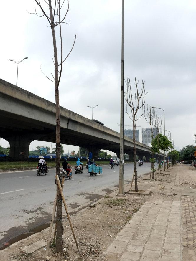 """Hà Nội: Đề nghị """"cấm cửa"""" nhà thầu để cây chết khô - 1"""