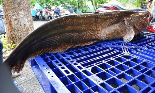 """Tận thấy cá """"khủng"""", phải 3 người khiêng ở Sài Gòn - 3"""