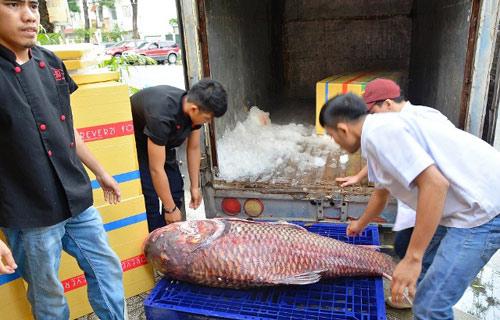 """Tận thấy cá """"khủng"""", phải 3 người khiêng ở Sài Gòn - 1"""