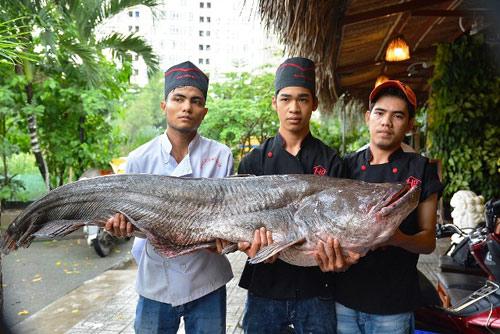 """Tận thấy cá """"khủng"""", phải 3 người khiêng ở Sài Gòn - 4"""