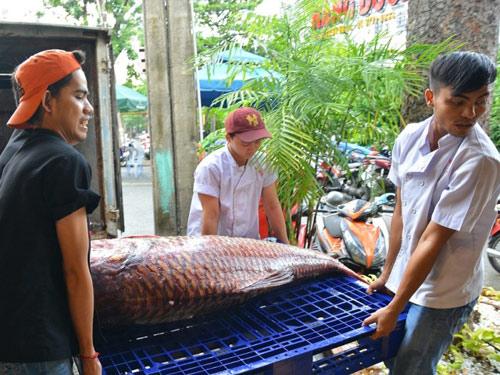 """Tận thấy cá """"khủng"""", phải 3 người khiêng ở Sài Gòn - 2"""