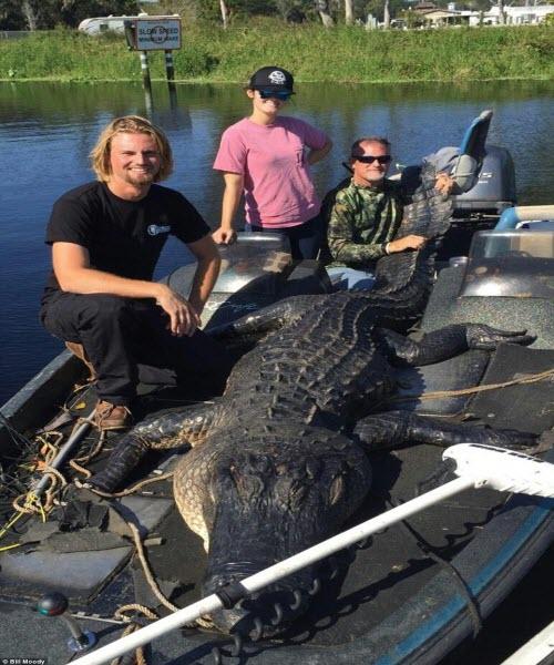 Bắt được cá sấu khổng lồ dài 4m ở Mỹ - 1